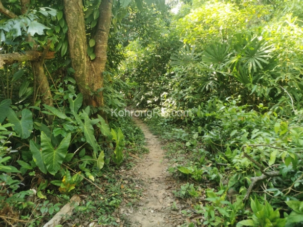42000 sqm land for sale on Koh Rong soft title Cambodia