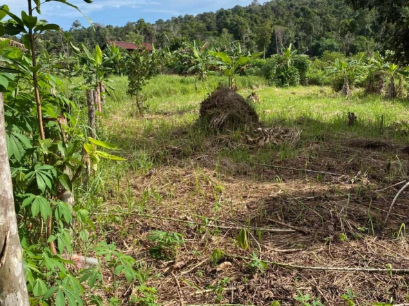 affordable land for sale in Koh Rong island Cambodia
