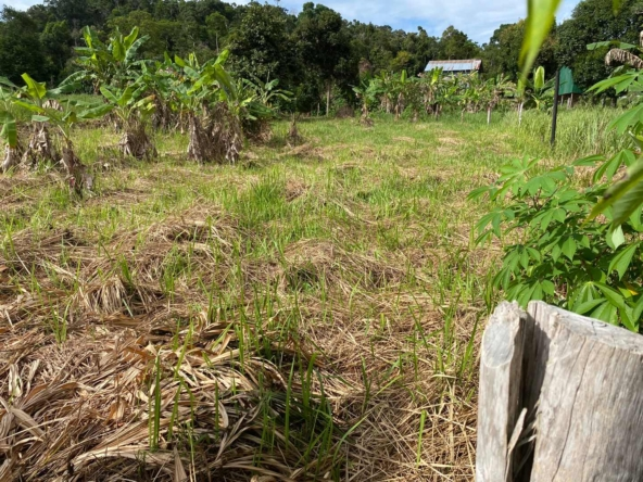 affordable land for sale in Koh Rong island Cambodia 2