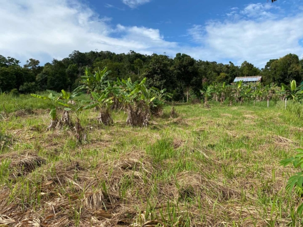 affordable land for sale in Koh Rong island Cambodia 3