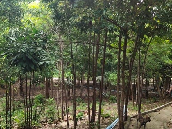 eco resort hotel business for sale in Koh Rong island, Cambodia (1)